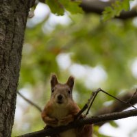 Любопытный обитатель леса :: Роман Ачкасов