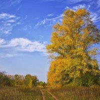 Осень :: Эркин Ташматов