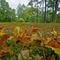 бронза осенних листьев :: Елена