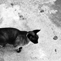 Sphinx :: Катерина Чебышева