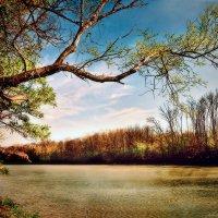 Нежность осеннего солнца :: Olga Zhukova