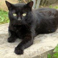 Чёрный кот :: Ирина Олехнович