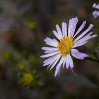 цветочек :: Ксения просто Ксения