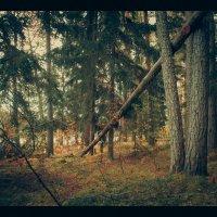 Сказочный лес. Нижегородская область :: Роман Царев