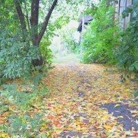 Дорога в осень :: Savayr