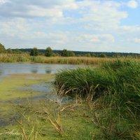 Осенний пруд :: °•●Елена●•° ♀