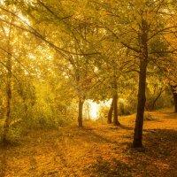 Осень :: Александр Самородов