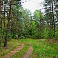 Зеленый сентябрь :: Милешкин Владимир Алексеевич