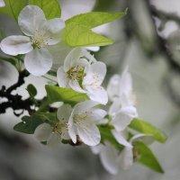 Цветочный хоровод-608. :: Руслан Грицунь