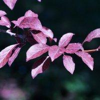 Уж осень неслышно крадется... :: Swetlana V