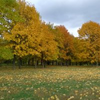 Осенний убор. :: Александр Атаулин