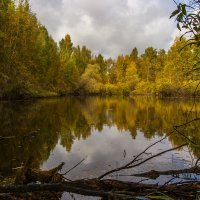 Лесное озеро. :: Kassen Kussulbaev