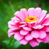 Цветок :: Дарья Левина