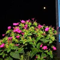 Ночные цветы :: Олег Баламатюк