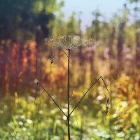 осень в цвету. :: ганичев алексей