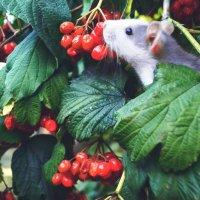 Тварини теж милуються природою... :: Христина Терендій