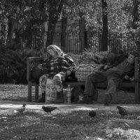 правда жизни, Луганск 2015 :: Алена Юрченко