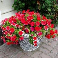 Цветы в городе...2 :: Тамара (st.tamara)