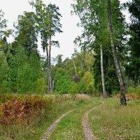 Начало осени в лесу :: Милешкин Владимир Алексеевич