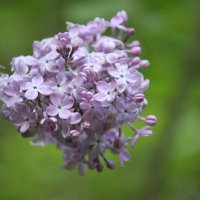 Цветочный хоровод-614. :: Руслан Грицунь