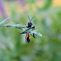 природа :: Albina Aidinowa