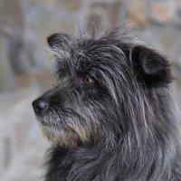 Портрет бродячего пса. ...Диоген тоже называл себя собакой. :: Юрий Воронов