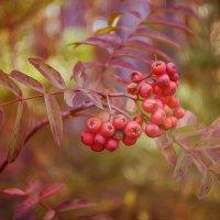 Рисует осень... :: Светлана