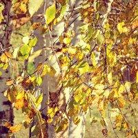 Спасибо, осень! - говорят березы: за то что золото вплела нам в косы :: Светлана