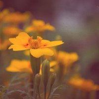 осень рисует.. :: Светлана