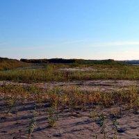 Пустынный мотив в вымских песках :: Николай Туркин