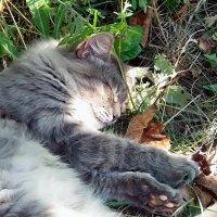 Сладкий сон! :: Наталья