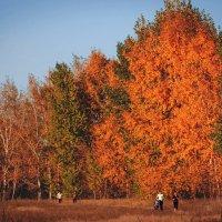Осень :: Инна Голубицкая