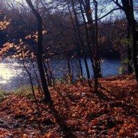 Осень :: Nastasia Nikitina