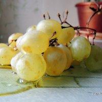 Виноград :: Майкл