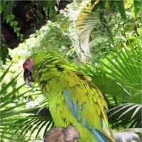 Зеленый попугай :: Anjelika Reshetnikova