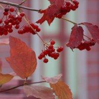Осень красная :: Владимир Пименков