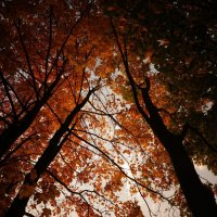 Янтарное небо :: Анастасия Макарова