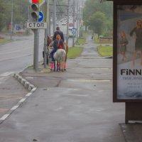 на светофоре :: Светлана Соловьева