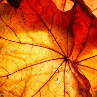 Осень :: Anjelika Reshetnikova
