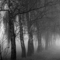 Березы в тумане :: Вадим Вайс
