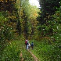 С папой в лесу не страшно :: Андрей Лукьянов