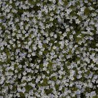 Цветочный хоровод-623. :: Руслан Грицунь