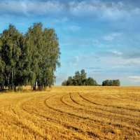 Урожай собран :: Дмитрий Конев