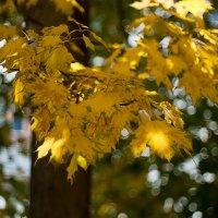 ...осень... :: Андрей Гр