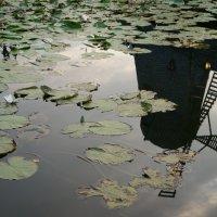 В опрокинутом Мире мир очень красив.... :: Алёна Савина