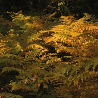 Осенний лес! :: Наташа Шамаева