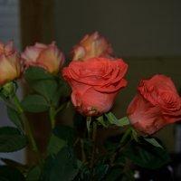 роза :: Владимир