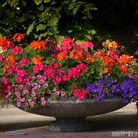 Осенние цветы :: Дмитрий Лебедихин