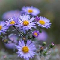 поздние цветы :: Наталья ***