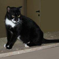 Жил да был чёрный кот... :: Larisa